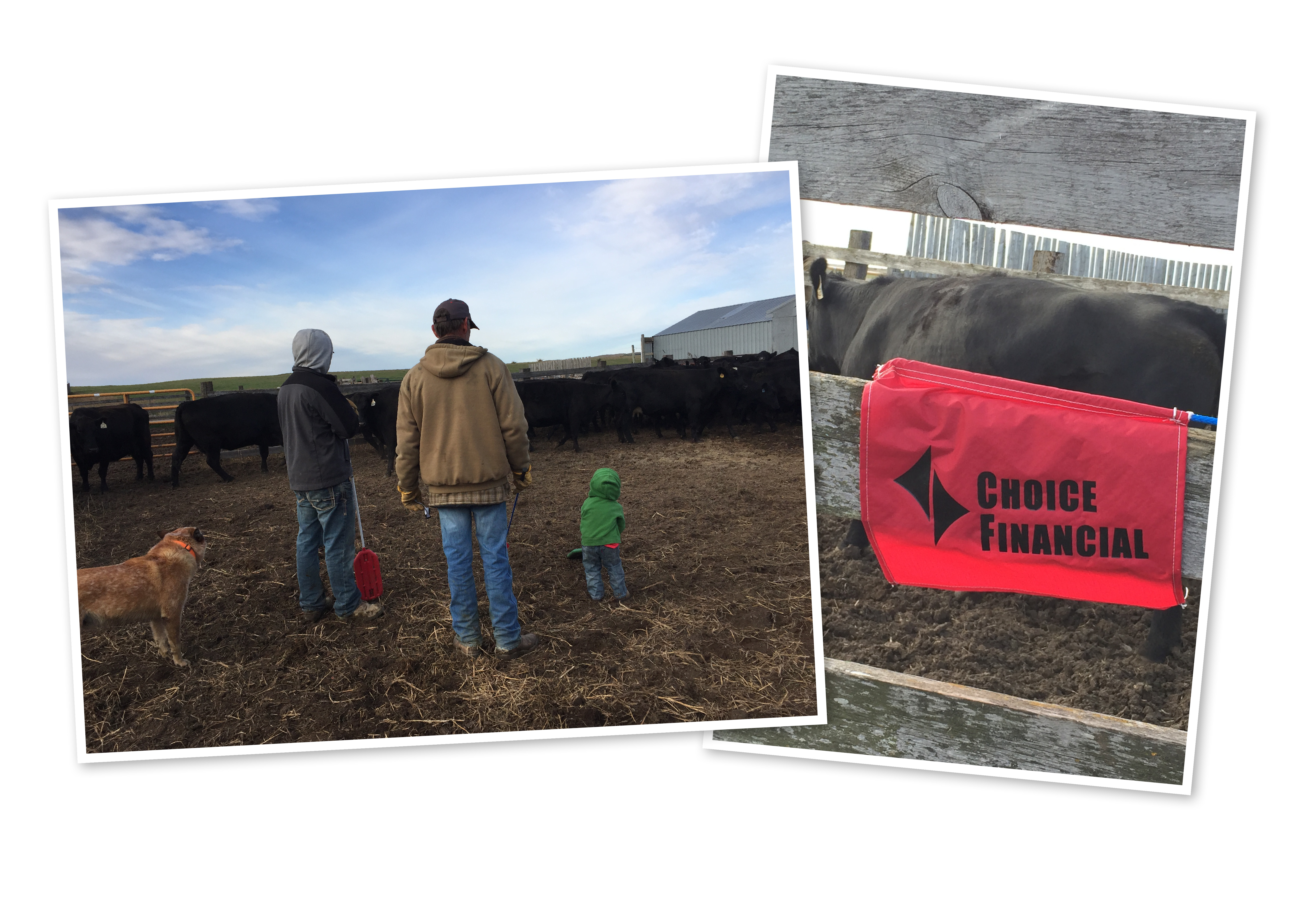 Haley's fiance Cole, her father Mark and her son Stetson look over the cattle